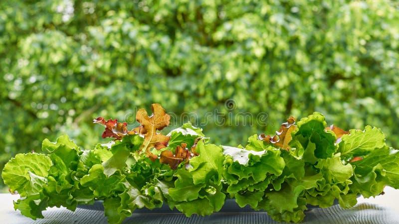 Zielona świeża sałaty sałatka opuszcza na zamazanym natury tle Składniki dla zdrowych sałatki lub detox smoothies obraz stock