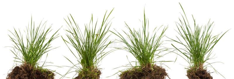 Zielona świeża trawy łąka odizolowywająca zdjęcie stock