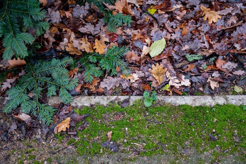 Zielona świerczyna rozgałęzia się nad parkland ziemią zdjęcia royalty free