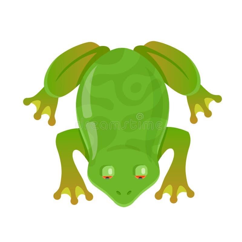 Zielona żaba z czerwienią ono przygląda się na białym tle royalty ilustracja