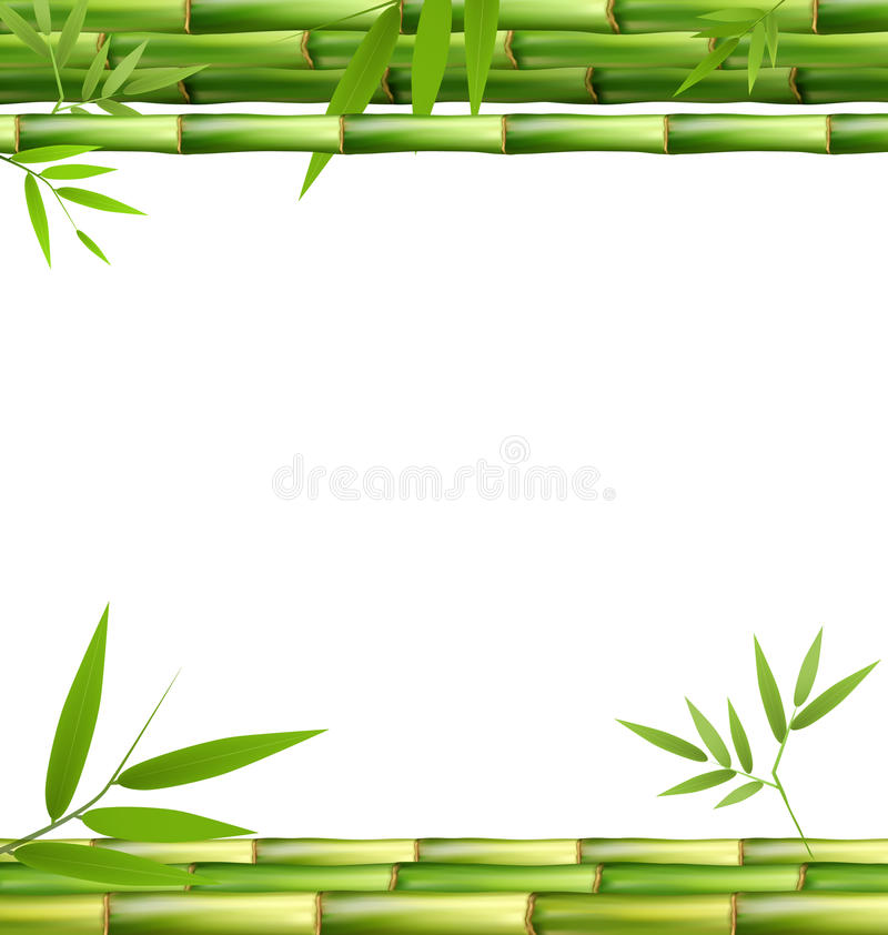 Zielona Bambusowa trawa na bielu ilustracja wektor