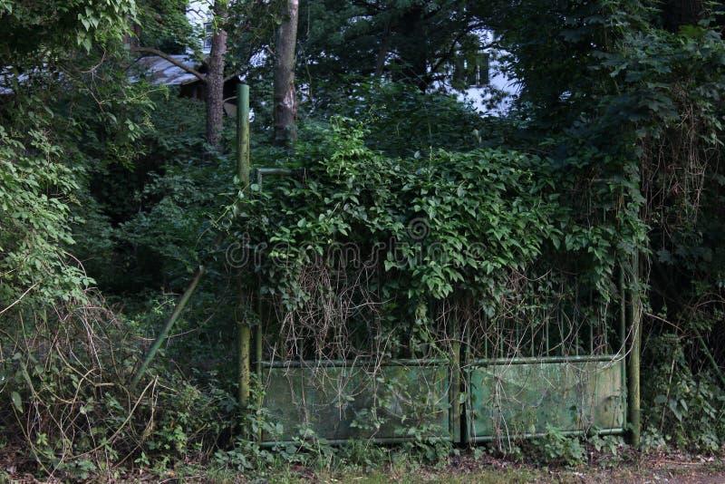 Zielona brama Przerastająca z bluszczem obraz royalty free