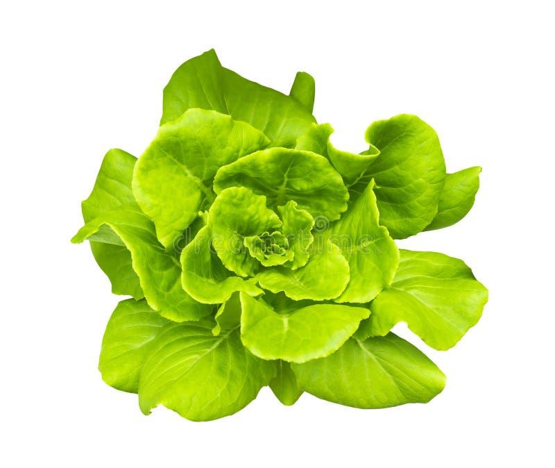 Zielona Butterhead sałata zdjęcie stock