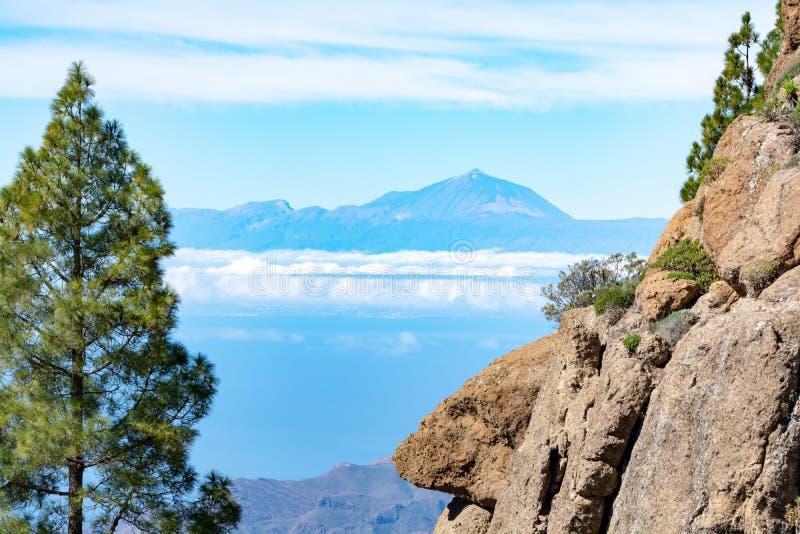 Zielona Canarian sosna i góra krajobraz na Gran Canaria wyspie, widok na górze Teide, Tenerife, kanarek, Hiszpania obraz royalty free
