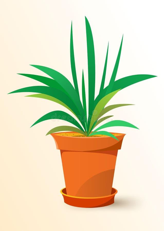 Zielona Chlorophytum roślina w garnku ilustracja wektor