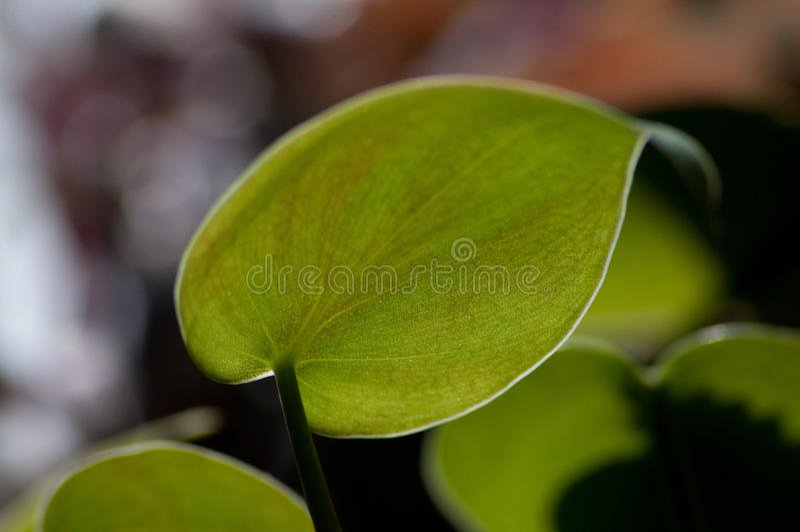 Zielona chwała zdjęcie royalty free