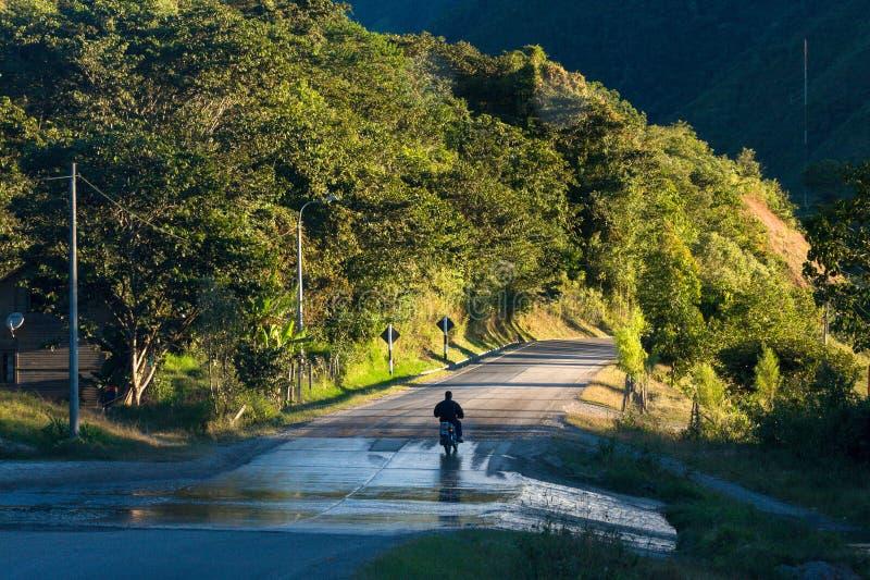 ZIELONA dżungla PERUWIAŃSKI las tropikalny obraz royalty free