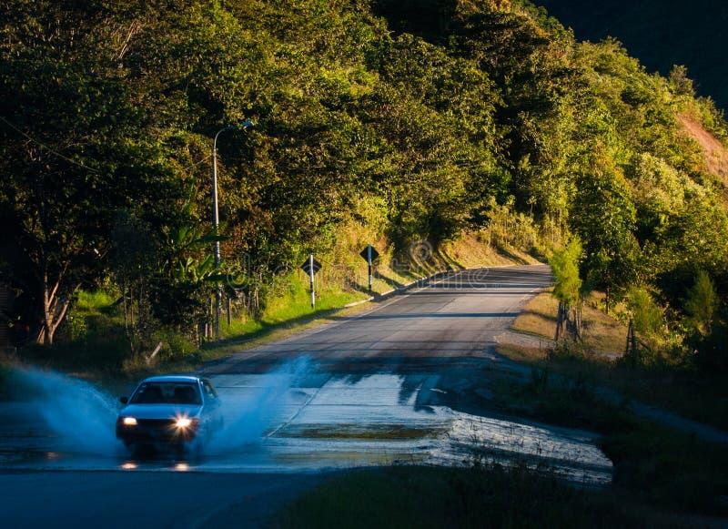 ZIELONA dżungla PERUWIAŃSKI las tropikalny fotografia royalty free