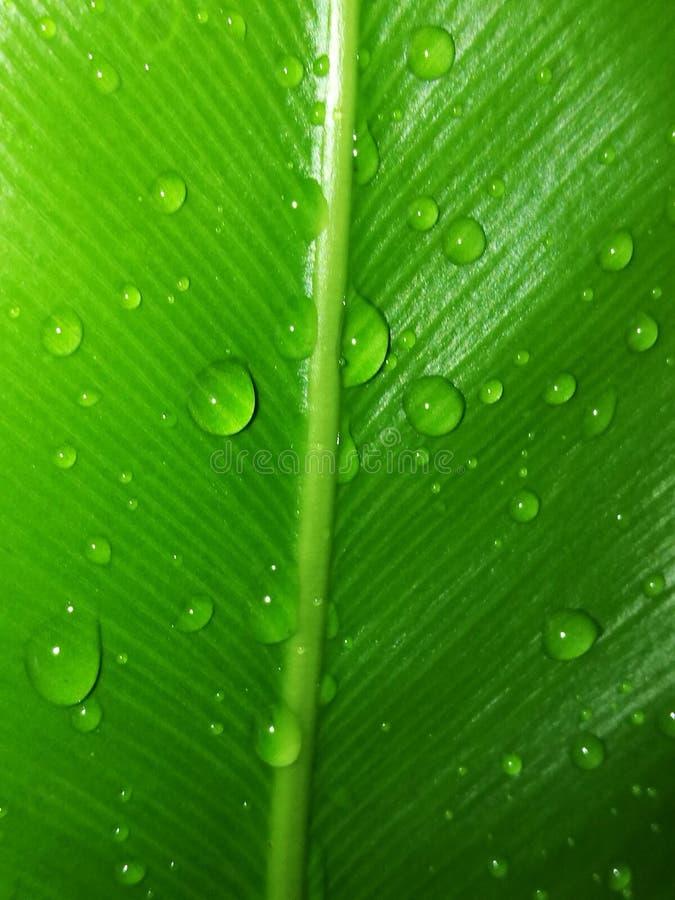 zielona deszcz kropla obrazy royalty free