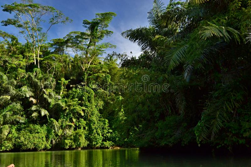 zielona dolina fotografia stock