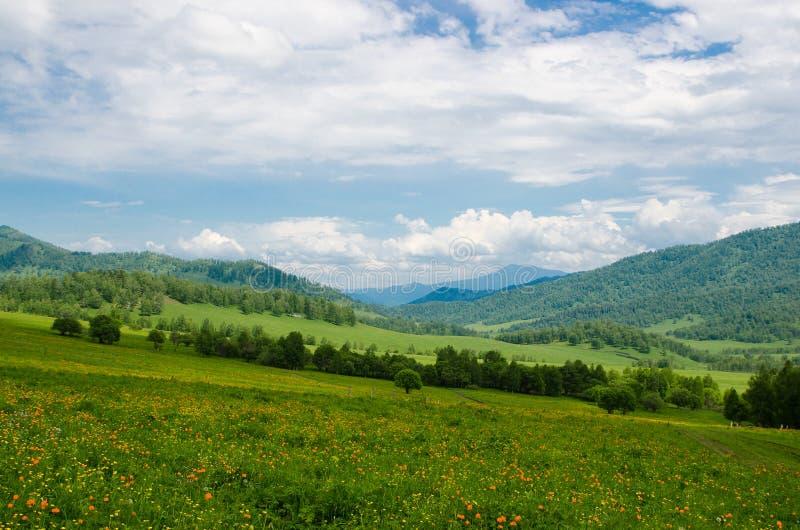 Zielona dolina wysoka na górach z widokiem rozjaśniać niebo w letnim dniu spangled z kwitnienie kwiatów lata krajobrazem, Al zdjęcie royalty free