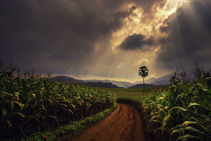 Zielona droga, świeże powietrze i błoto, fotografia royalty free