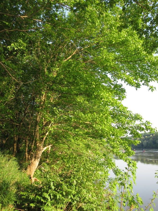 Zielona drzewa i Potomac rzeka przy zmierzchem obrazy royalty free