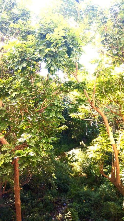 Zielona drzewo natura fotografia stock