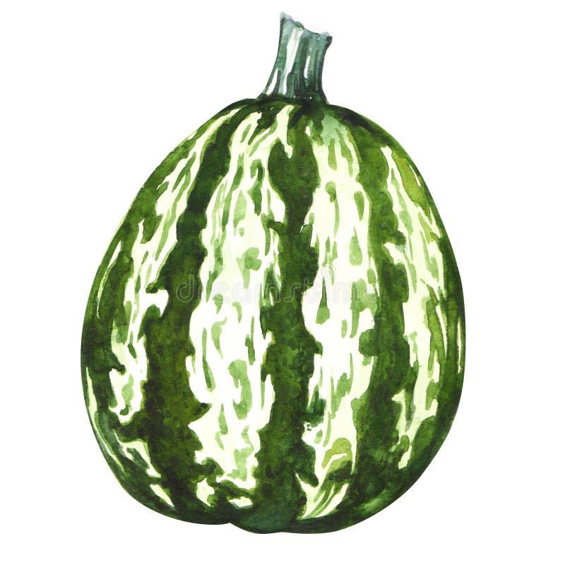 Zielona dyniowa gurda royalty ilustracja