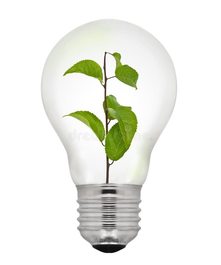 Zielona Energetyczna żarówka zdjęcia stock