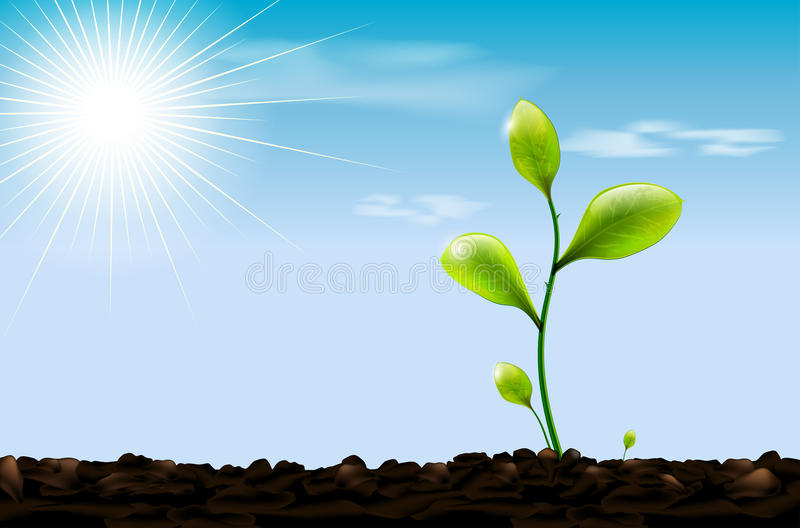 Zielona flanca, ziemia i niebieskie niebo z słońcem, ilustracja wektor