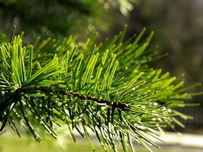 Zielona gałąź obrazy royalty free