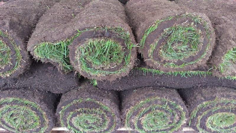 Zielona gazon trawy rolka przekręcał w rolkę obrazy royalty free