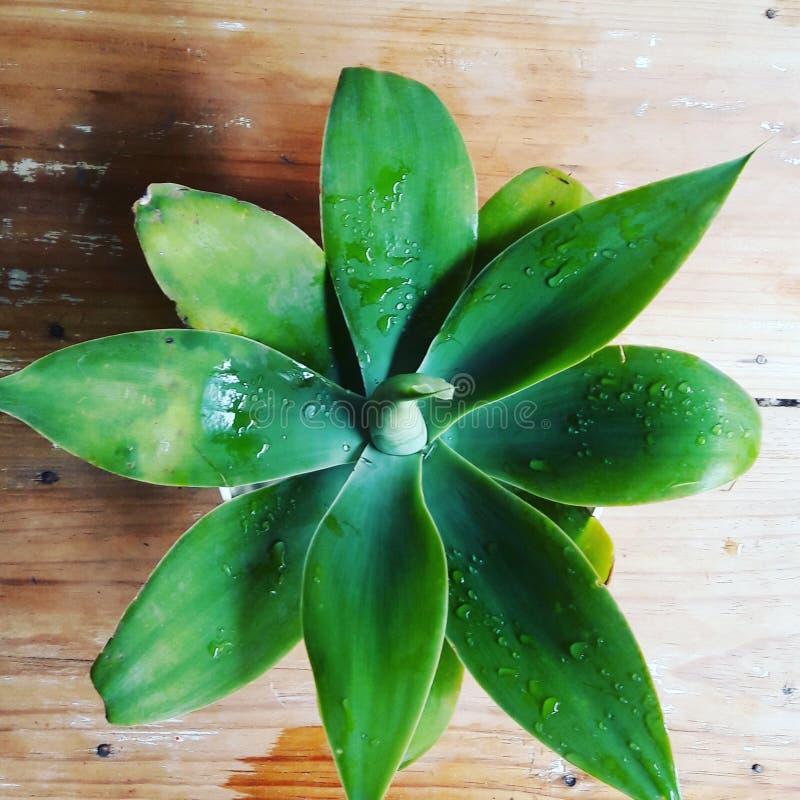 zielona gwiazda zdjęcia stock