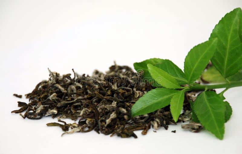 zielona herbata zdjęcie stock