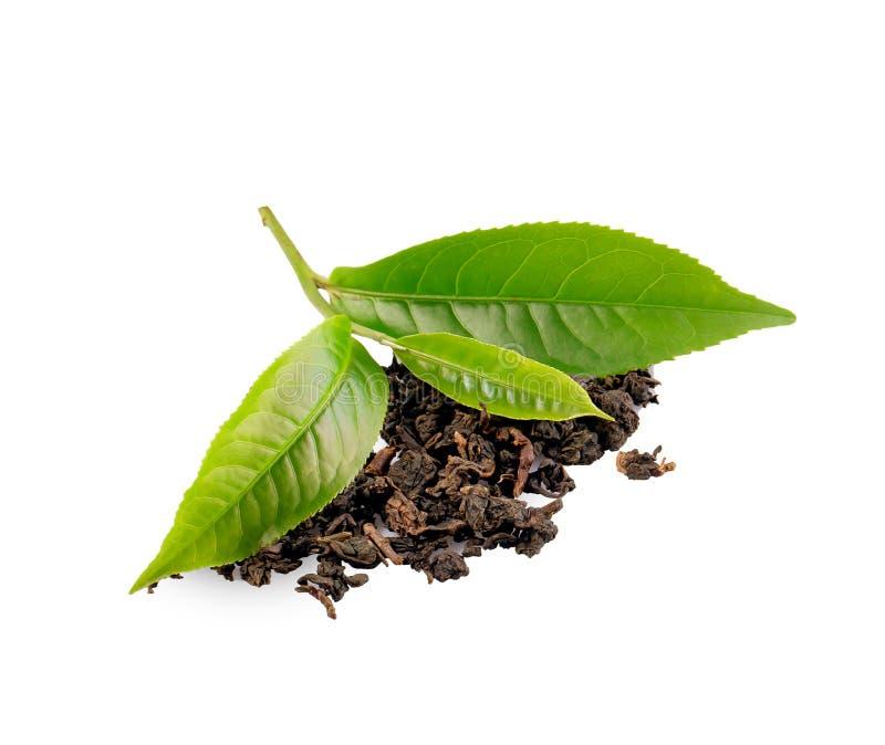 Zielona herbata li?? odizolowywaj?cy na bia?ym tle obrazy stock