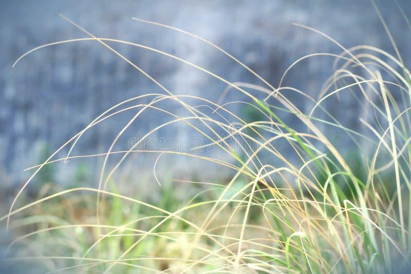 Zielona i żółta trawa z plama skutkiem obraz stock