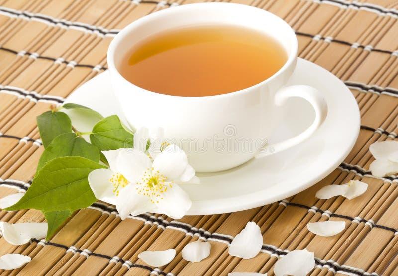 zielona jaśminowa herbata zdjęcia stock