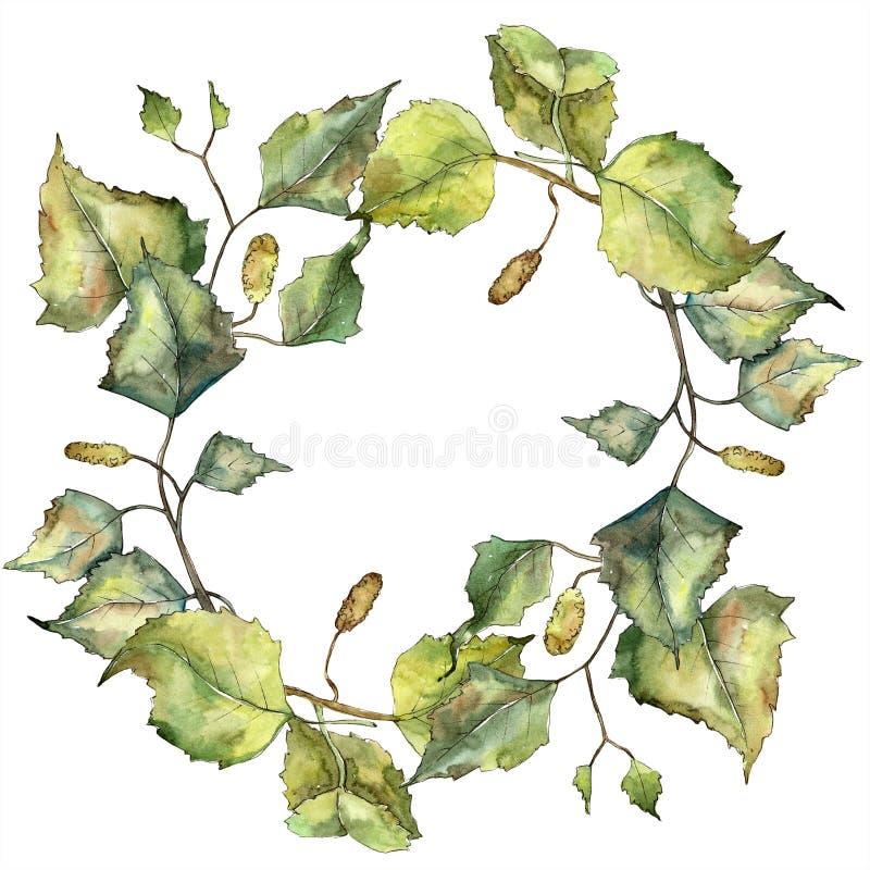 Zielona jesień liścia brzoza Liść rośliny ogródu botanicznego kwiecisty ulistnienie Odosobniony ilustracyjny element ilustracja wektor