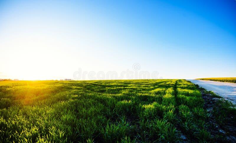 Zielona ??ka pod niebieskim niebem z chmurami Pi?kny natura zmierzchu krajobraz obrazy stock