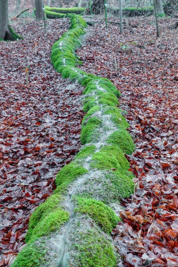 Zielona Kamienna bruzda w lesie w Bavaria zdjęcie royalty free