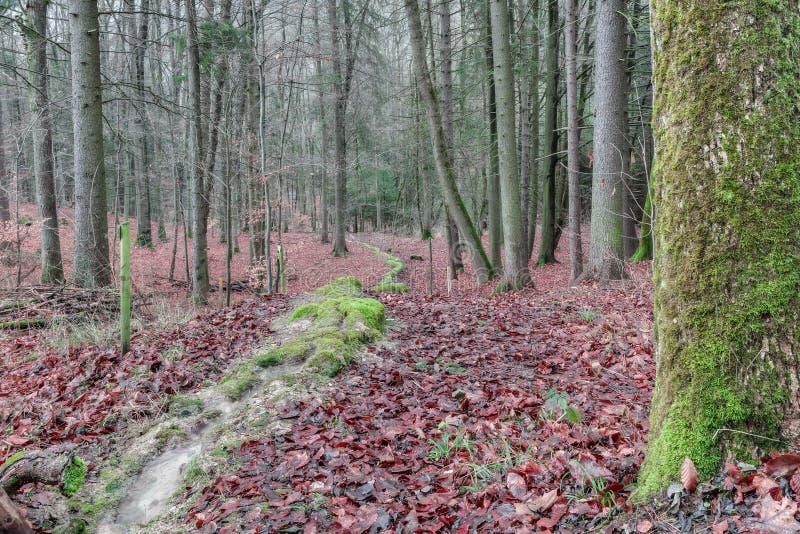 Zielona Kamienna bruzda w lesie w Bavaria zdjęcia royalty free