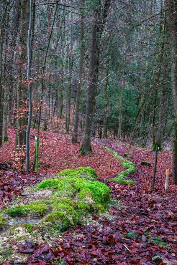 Zielona Kamienna bruzda w lesie w Bavaria zdjęcia stock