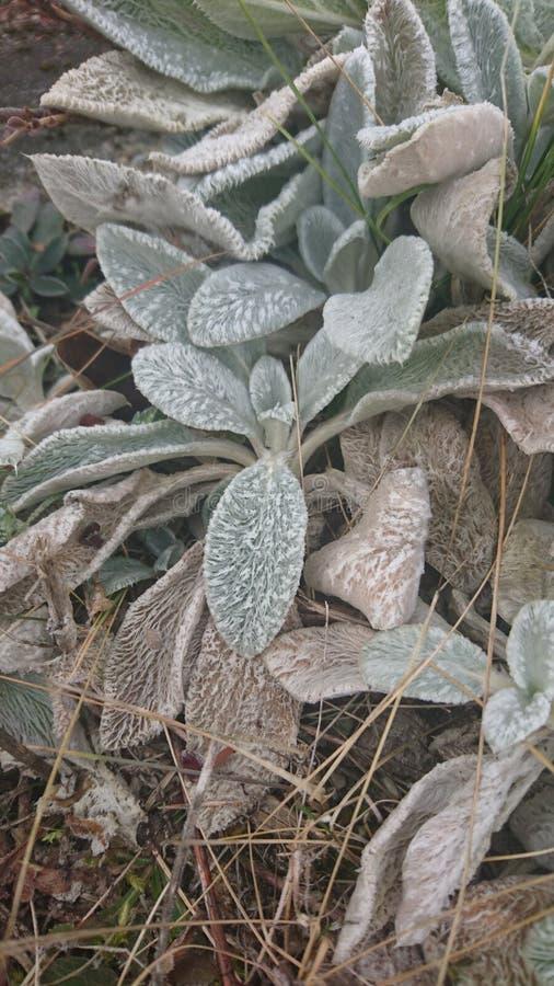 Zielona kwiat rzecz zdjęcie stock