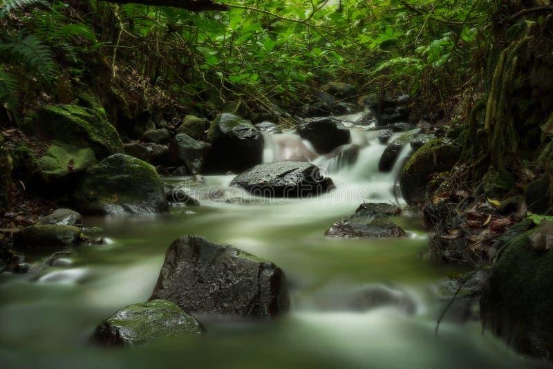 Zielona las tropikalny rzeka na chmurnym dniu fotografia stock