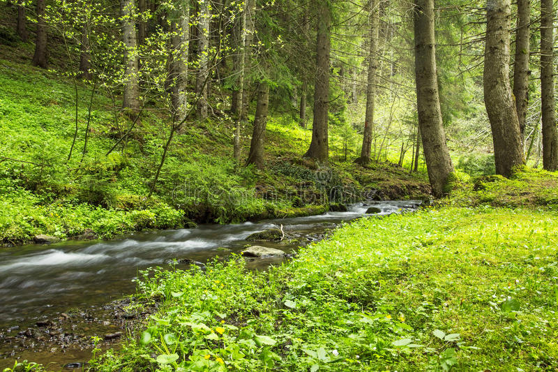Zielona lasowa roślinność z zatoczki spływaniem zdjęcie stock