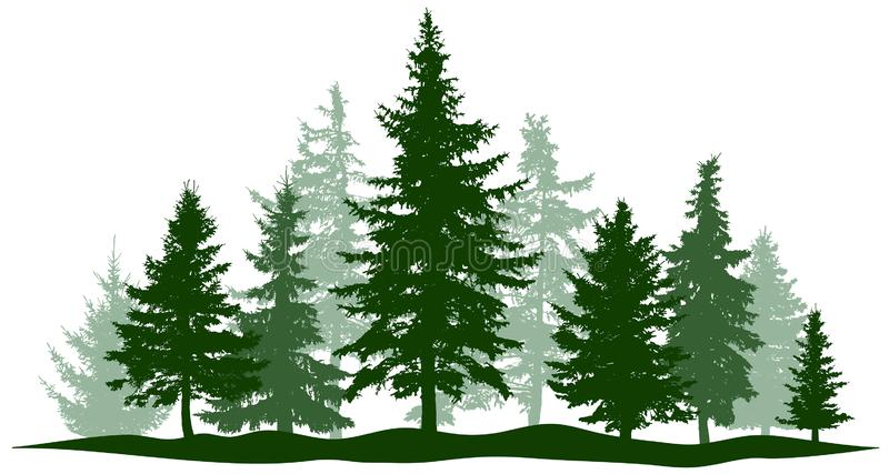 Zielona lasowa wiecznozielona sosna, drzewo odizolowywający Parkowa choinka Jednostka, oddziela przedmioty royalty ilustracja