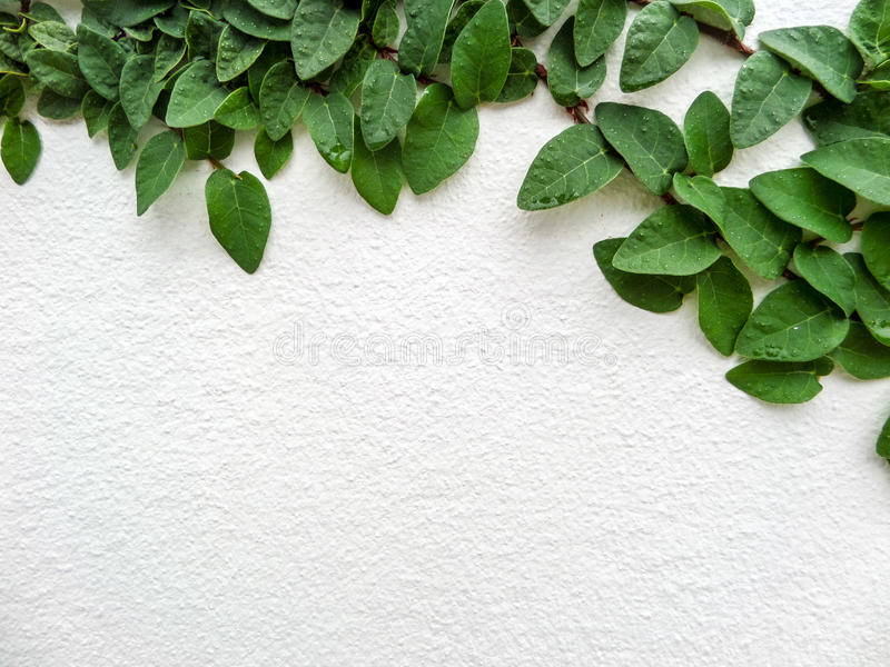 Zielona liść granica, Odizolowywa roślina obrazy royalty free
