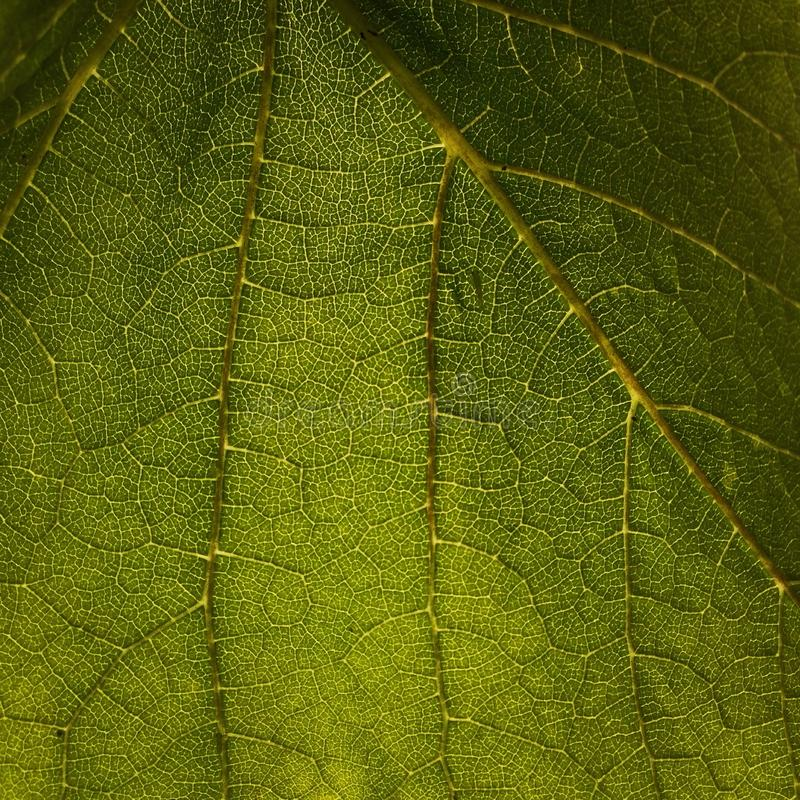 Zielona liść natura fotografia royalty free