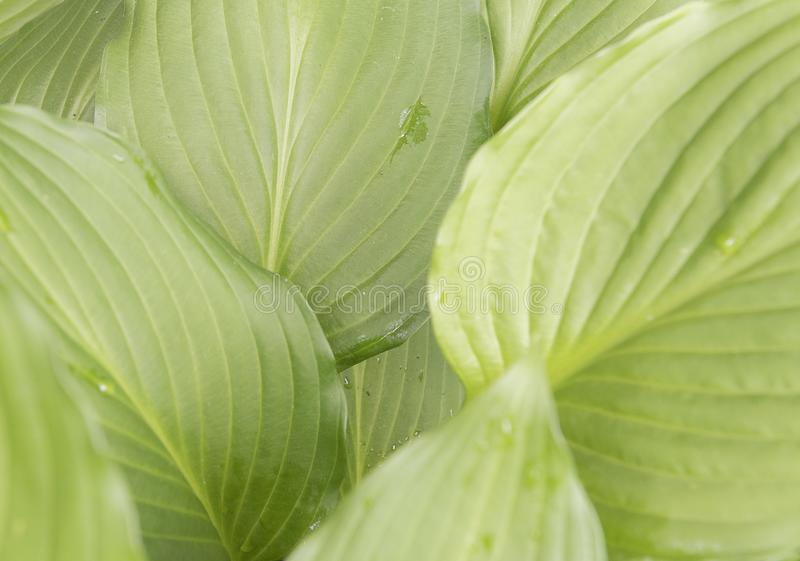 Zielona liść roślina pokazuje w górę zakończenia obrazy royalty free