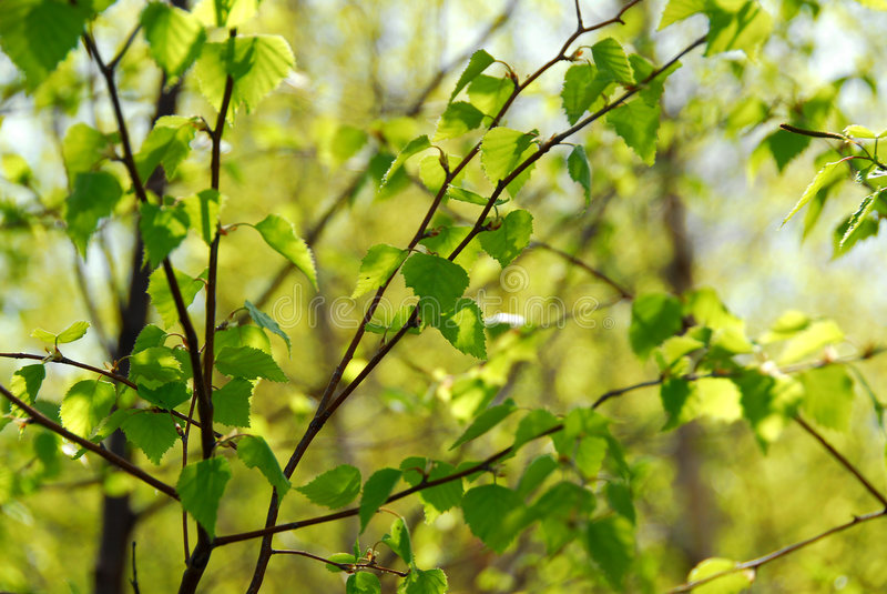 zielona liść wiosna zdjęcia royalty free