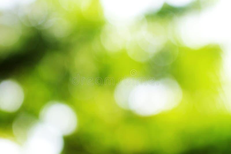 Zielona liścia bokeh plama fotografia royalty free