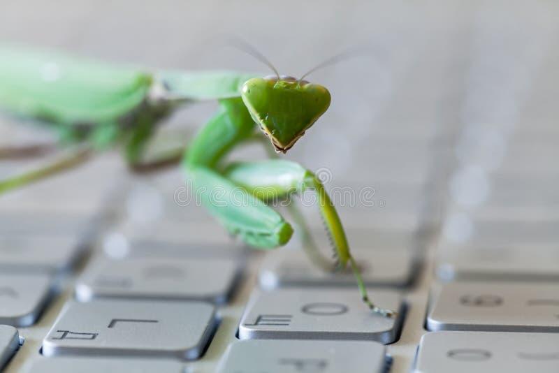 Zielona modliszka, insekta odciskania klucz na laptopie fotografia stock