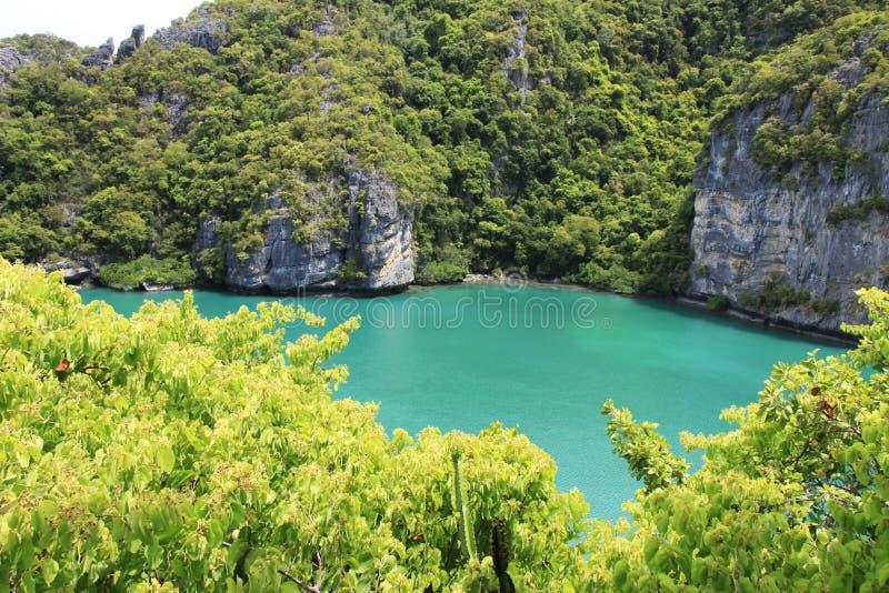 Zielona natura na dennym tle zdjęcie royalty free