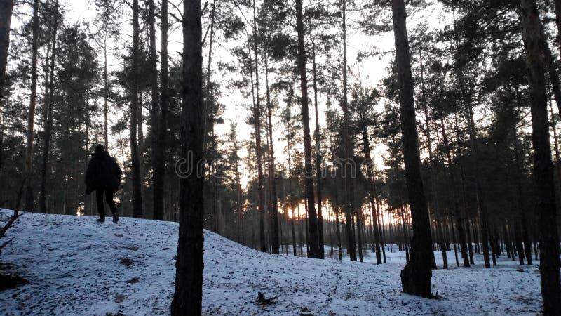 Zielona natura Ukraina zdjęcia royalty free