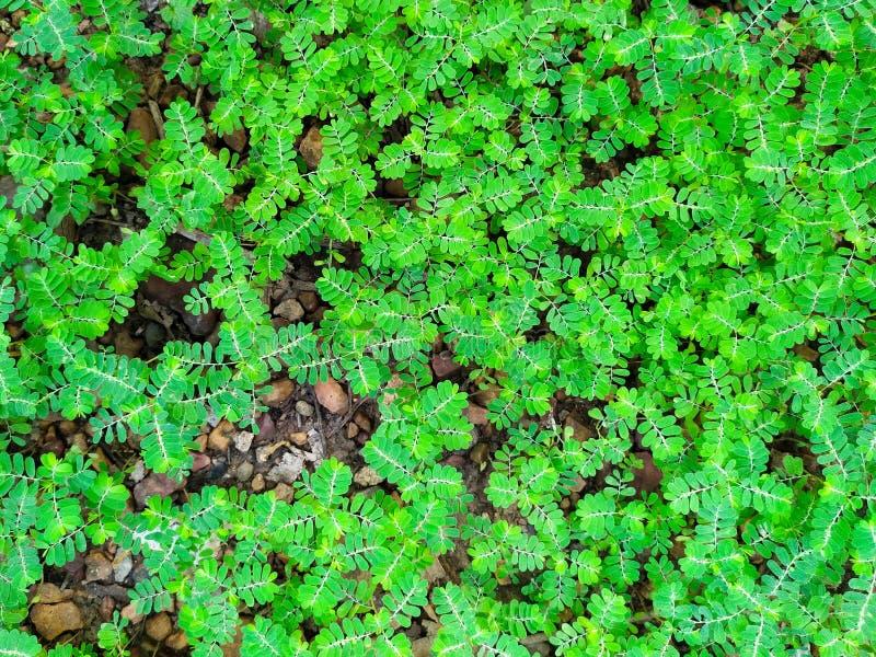 Zielona niechciana flora na ziemi fotografia royalty free
