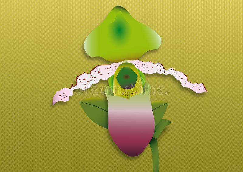 Zielona orchidea fotografia stock