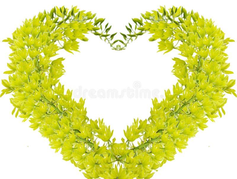 zielona orchidea obraz royalty free