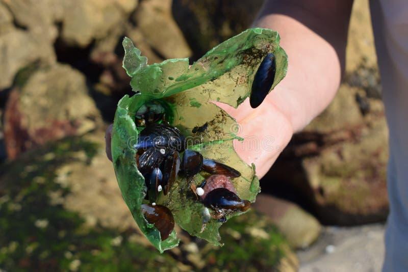 Zielona plastikowa butelka z dennym życiem dołączającym zdjęcie stock