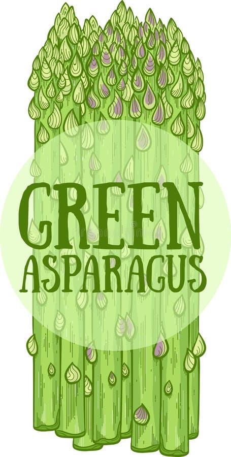 Zielona ręka rysująca asparagus wektorowa ilustracja royalty ilustracja